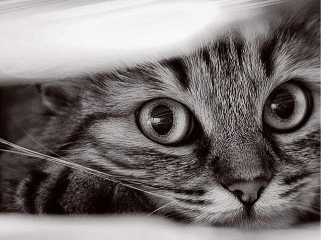 Cat 壁紙画像