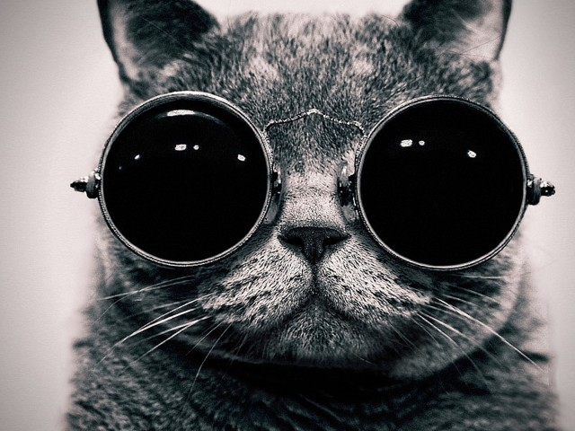 Cat With Sunglasses 壁紙画像