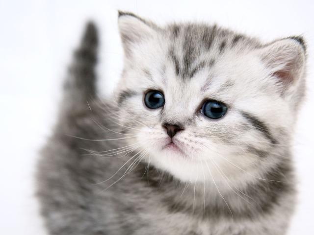 Cute Kitten 壁紙画像