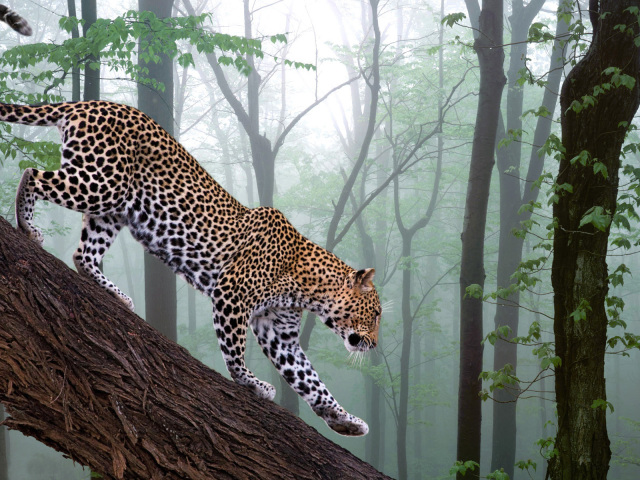 Jaguar 壁紙画像