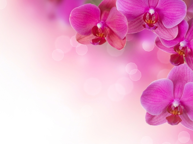 Purple Orchids 壁紙画像