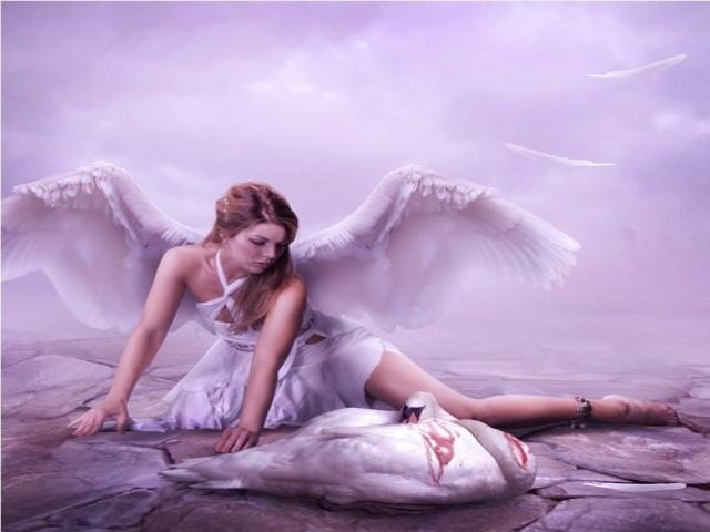 Swan Princess 壁紙画像