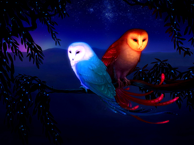 Two Owls 壁紙画像