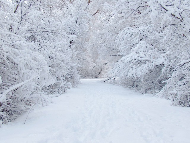 A Snow Covered Path 壁紙画像