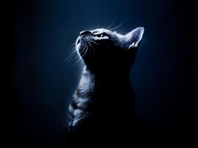 Black Cat 壁紙画像