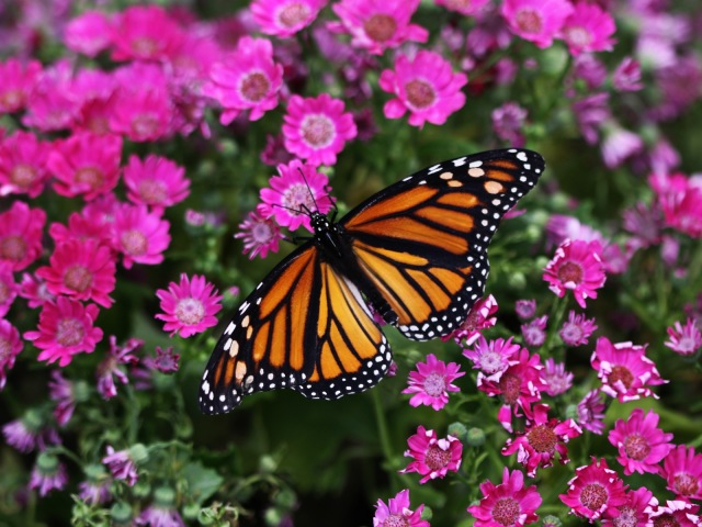 Butterfly Closeup 壁紙画像