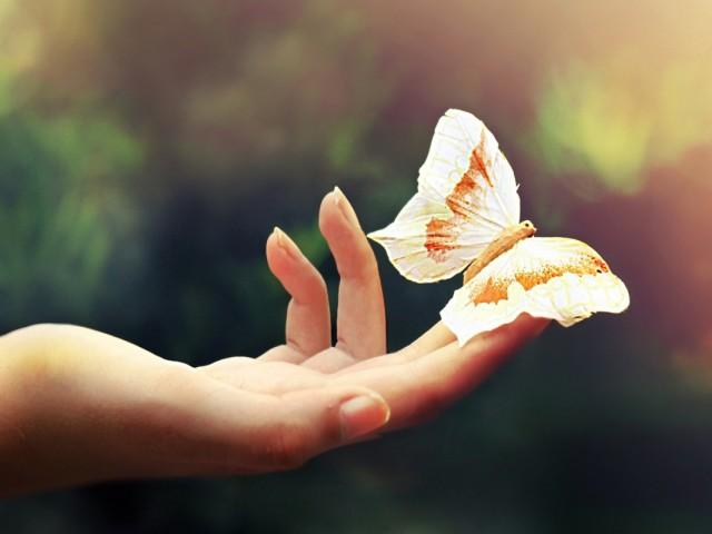 Butterfly 壁紙画像