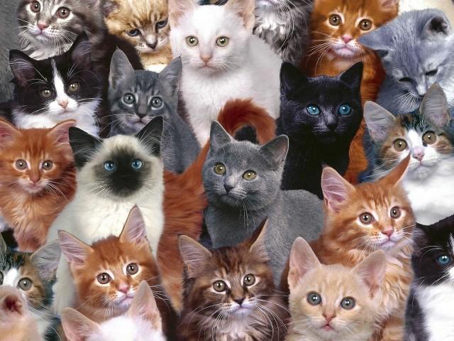 Cat Collage 壁紙画像