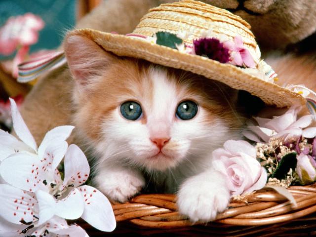 Cat Wiht A Hat 壁紙画像