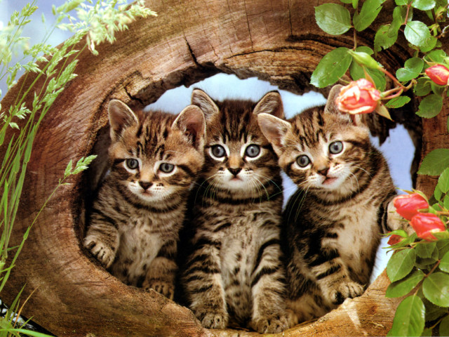 Cats In A Log 壁紙画像