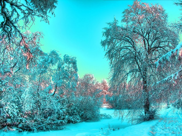Cerulean Winter 壁紙画像