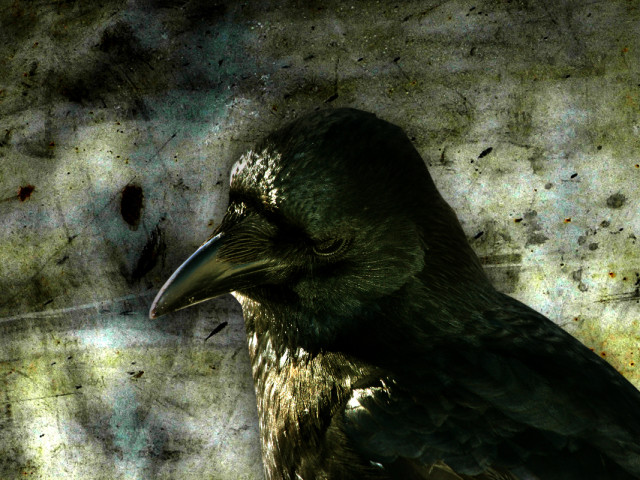 Crow Movie 壁紙画像