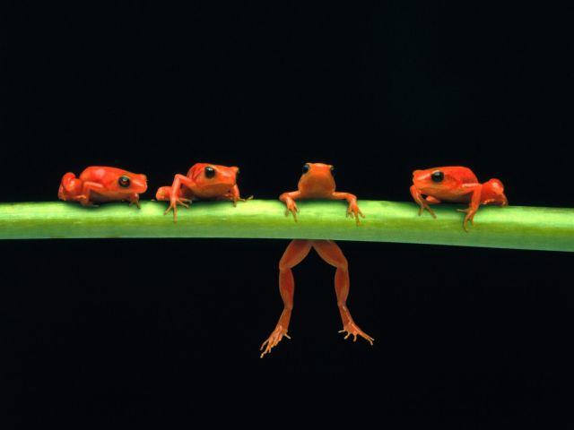 Dangling Frog Legs 壁紙画像