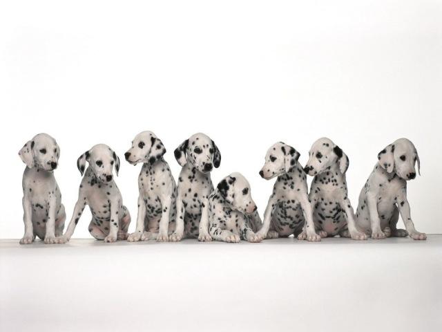 Dog 壁紙画像