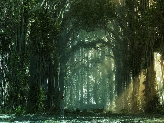 Fantasy Forest 壁紙画像