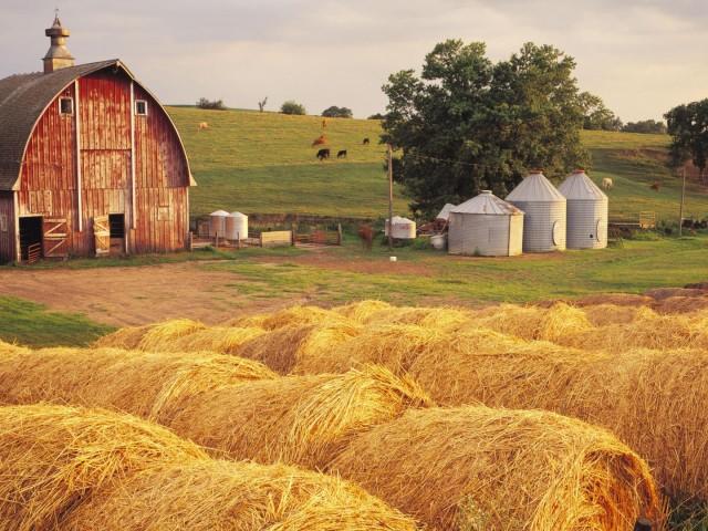 Farm 壁紙画像