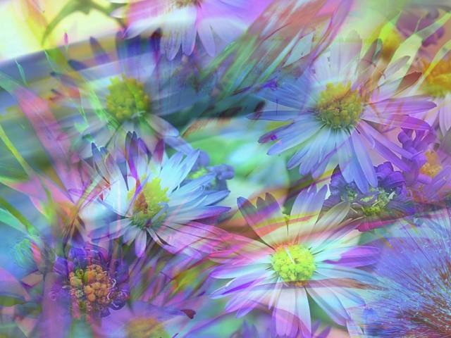 Flower 壁紙画像