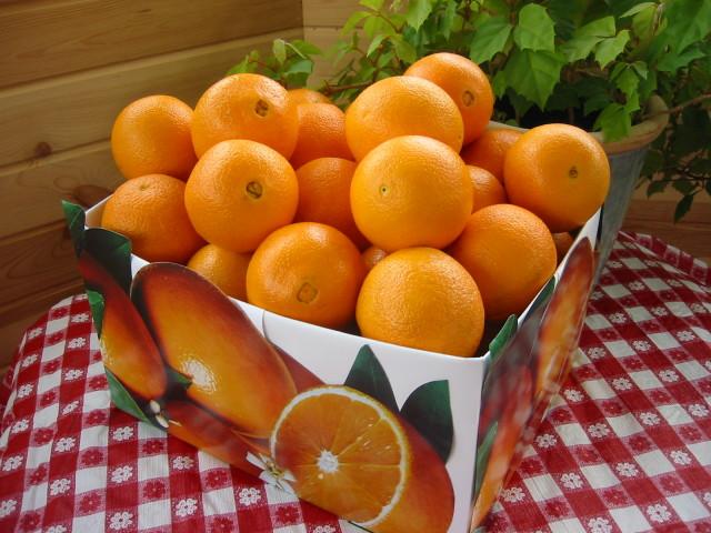Fruit 壁紙画像