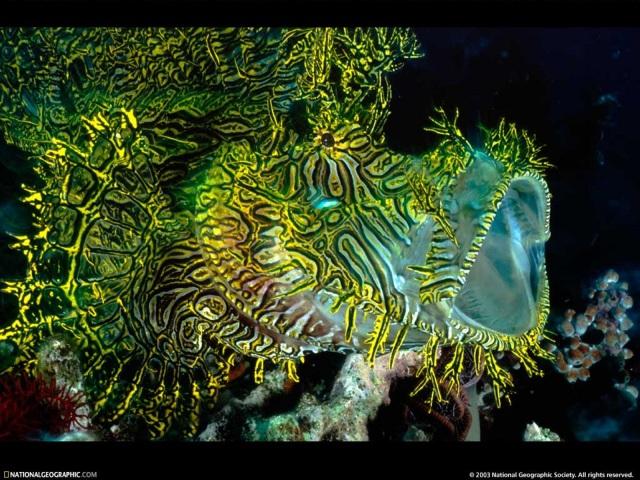 Green Fish 壁紙画像