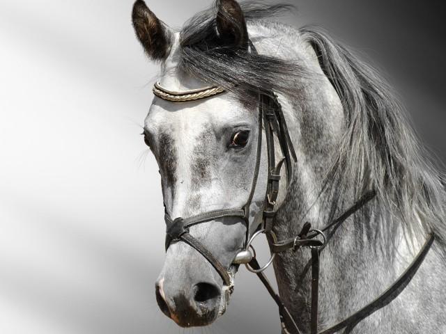 Horse Closeup 壁紙画像
