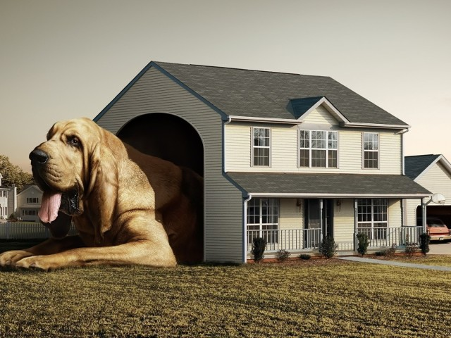 Huge Dog House 壁紙画像