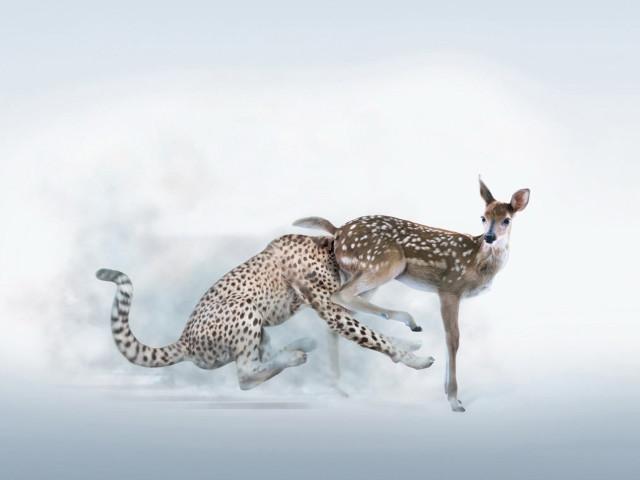 Humor Animal 壁紙画像