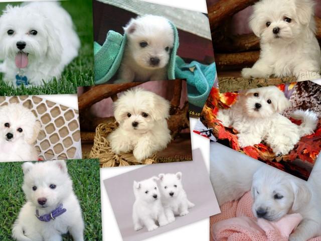 Puppies 壁紙画像