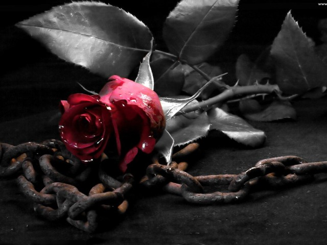 Rose With Metal Chains 壁紙画像