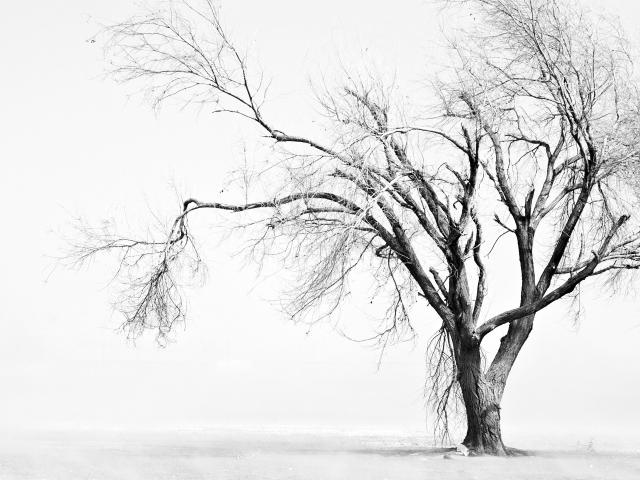 Sad Tree 壁紙画像