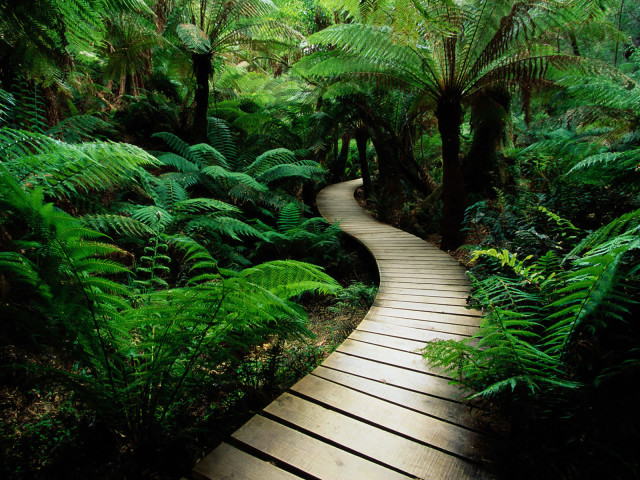 The Wooden Pathway 壁紙画像