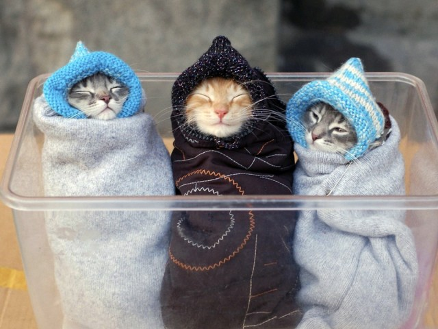 Three Kittens 壁紙画像