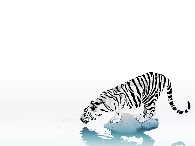Tiger Drinking Water 壁紙画像