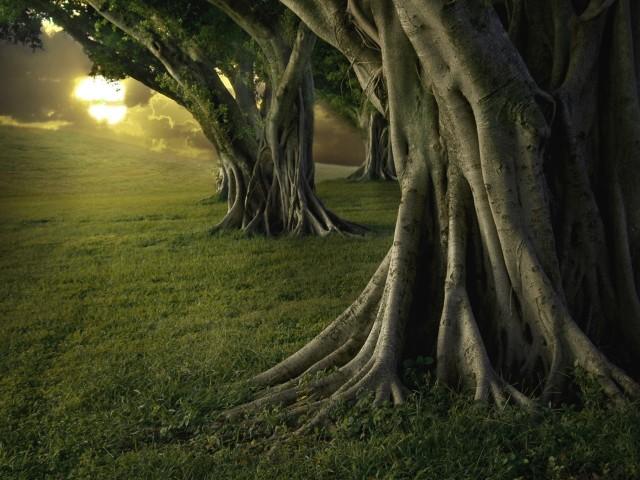 Tree 壁紙画像