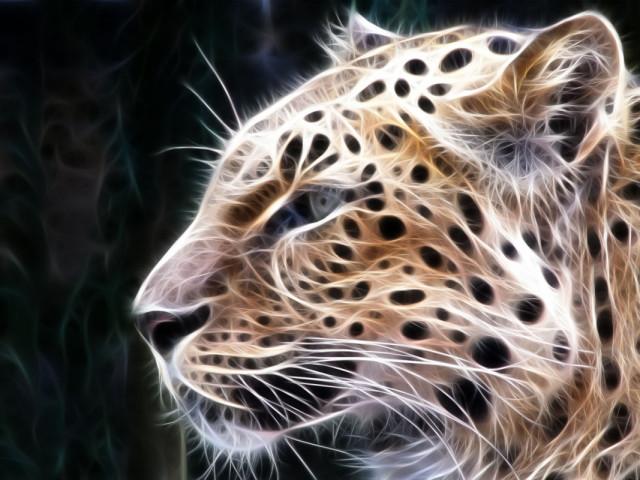 Wild Cat 壁紙画像