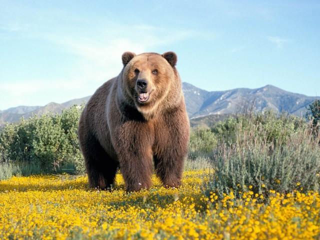Bear 壁紙画像