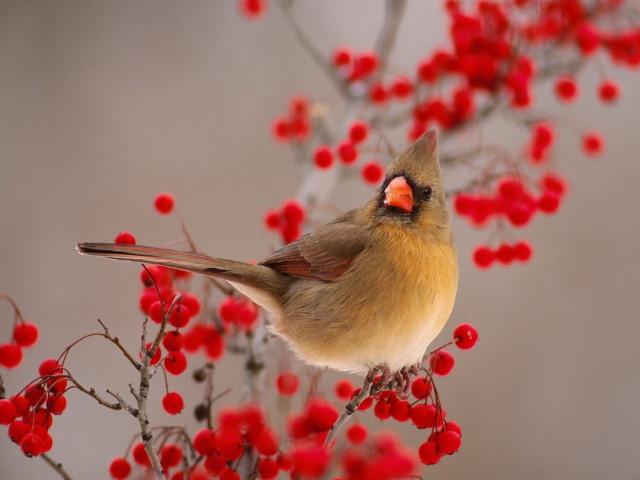Bird 壁紙画像