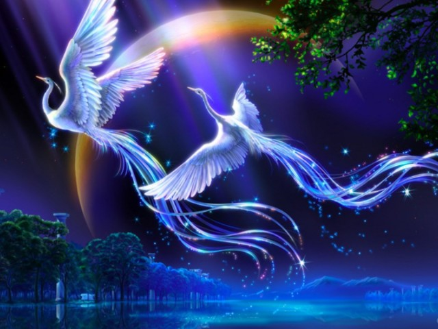 Birds Of Paradise 壁紙画像