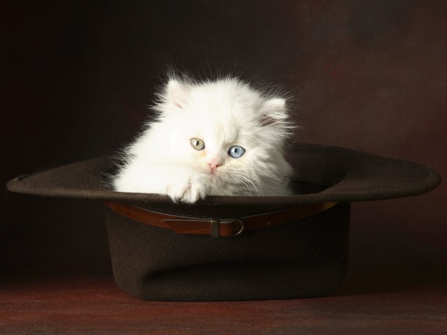 Cat Inside A Hat 壁紙画像