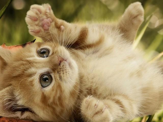 Cute Playful Kitten 壁紙画像