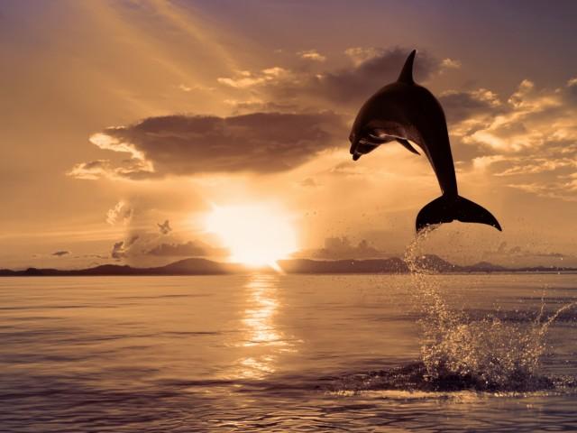 Dolphin 壁紙画像