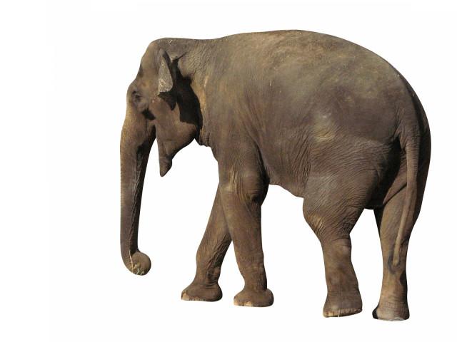 Elephant 壁紙画像