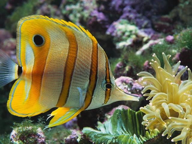 Fish 壁紙画像