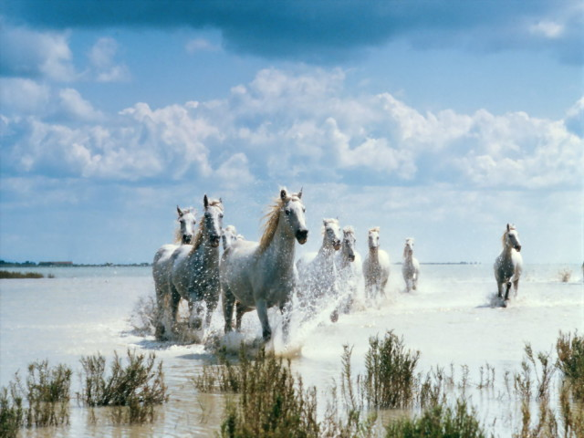 Horses By The Beach 壁紙画像