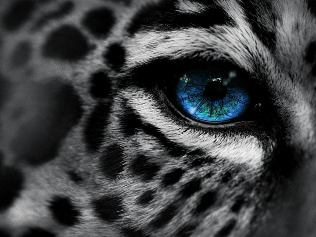 Leopard Closeup 壁紙画像