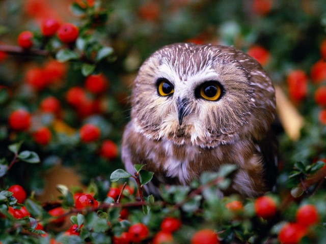 Owl In Garden 壁紙画像