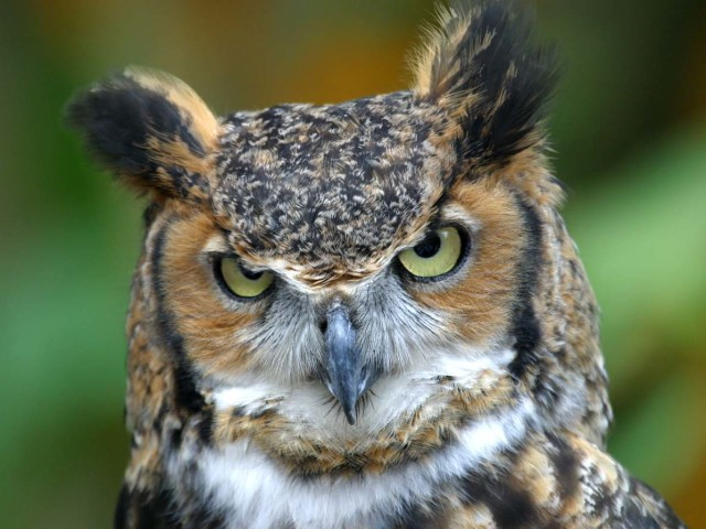 Owl 壁紙画像