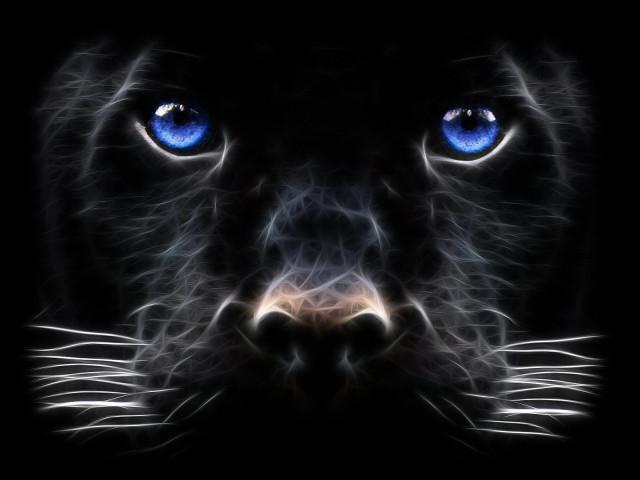 Panther Eyes 壁紙画像