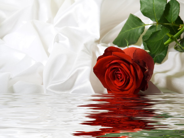 Rose Dipped In Water 壁紙画像