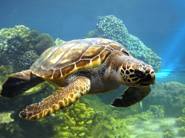 Turtle 壁紙画像