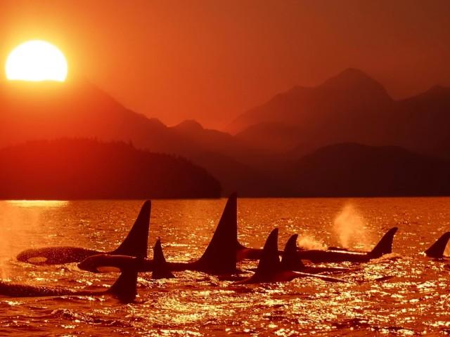 Whale 壁紙画像
